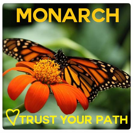 monarchmeditation.png