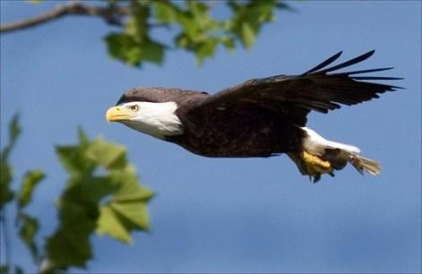 scorpio symbol eagle
