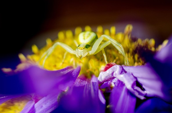 spider-197062_640
