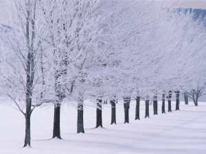 beautiful-photo-examples-of-winter-season-22-2016_05_14-02_02_56-utc