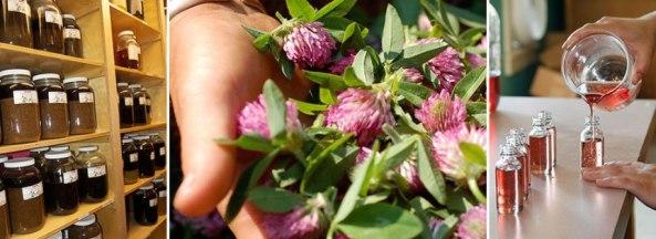herbal-med-making