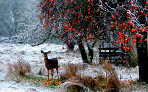 landscapes_nature_animals_deer_winter_snow_snowing_snowflakes_berries_trees_forest_christmas_seasons_1920x1200