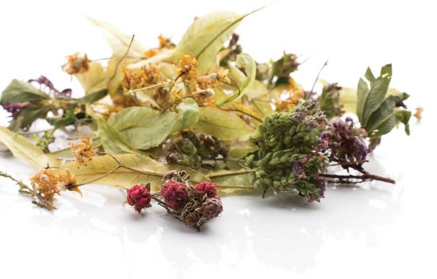 tea-gita-kulinitch-studio