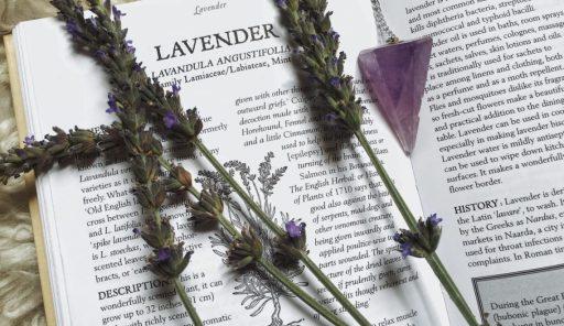 L-angustifolia-herbalism-01