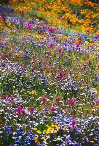 Wildflowers (the Isle of Taurus)