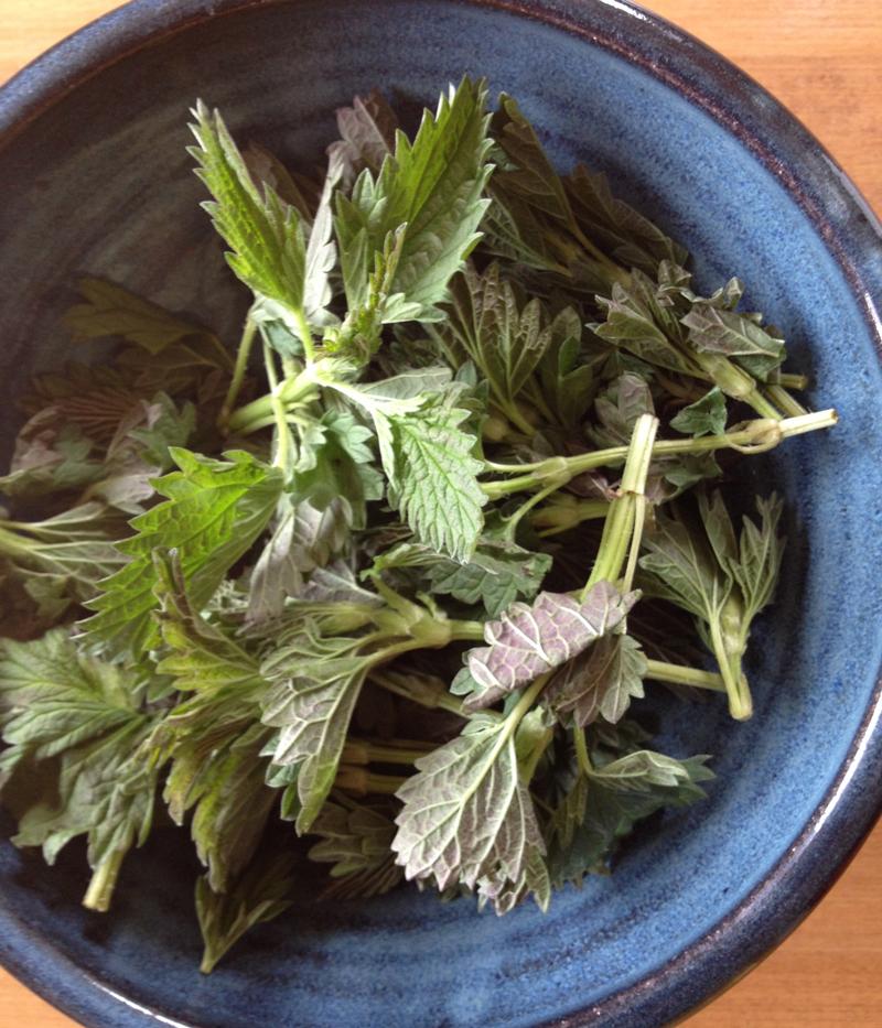 sustainable harvest nettles bowl