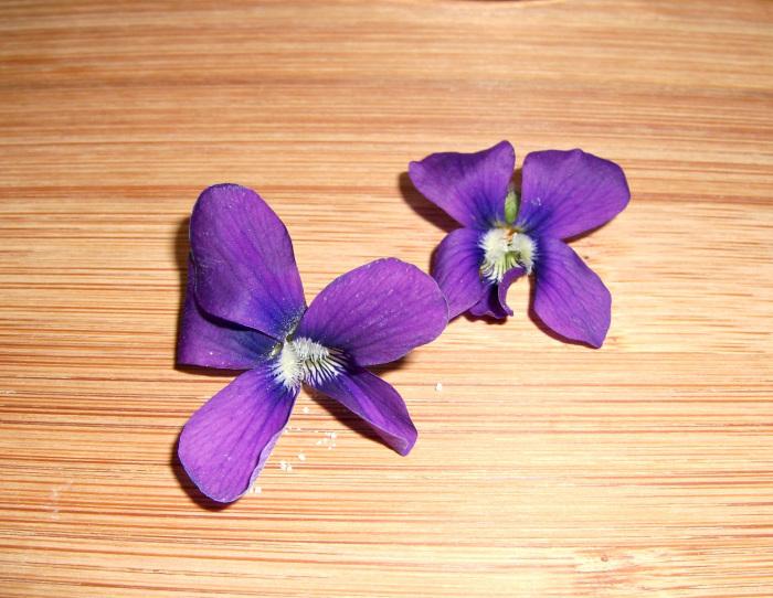 violets-edit-3