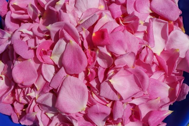 The Magick of Roses - Rose Petals