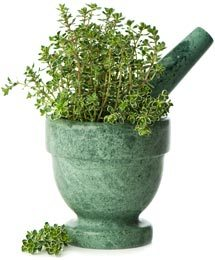Organic Thyme plant