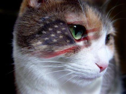 cat 4th