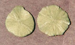 Pyrite Dollars