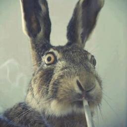 drunk_rabbit