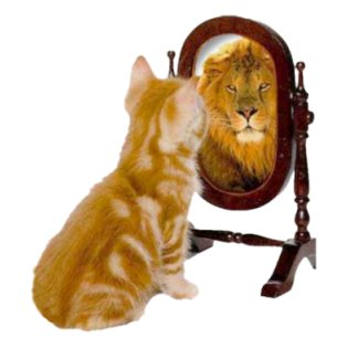 Image result for cat and lion mirror